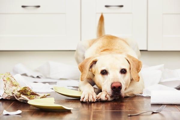 Bad Dog broken dish