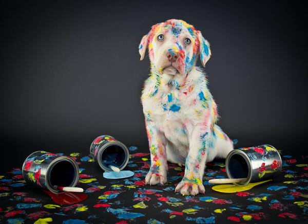 Bad dog gets into paint