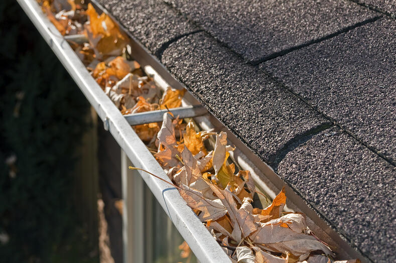 Home Maintenance, leaves in gutter