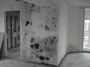 moldy wall, property maintenance