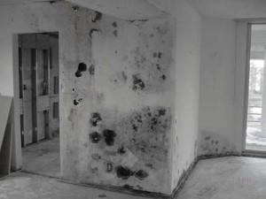 moldy wall, property maintenance