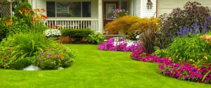 Your rental home in Charleston can attract more interest with the right lawn and landscaping.